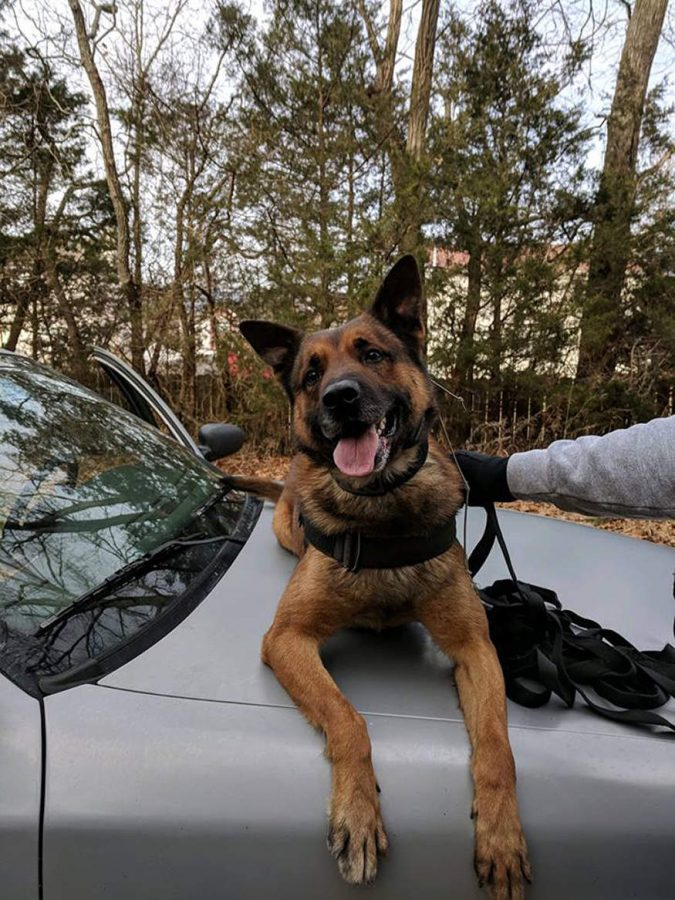 Local police dog stabbed in action