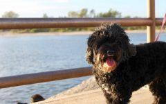 Take a MIDTERM MENTAL BREAK & Enjoy the Pets of PPBHS