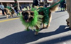 Even dogs get in the St. Patrick's spirit at the annual Belmar parade.